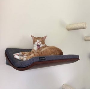 kệ uốn cong cho mèo 02 300x298 - Trang Chủ
