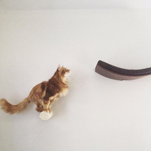 kệ uốn cong cho mèo 03 - Hợp tác cùng Plyconcept để ra mắt sản phẩm Kệ Uốn Cong Cho Mèo