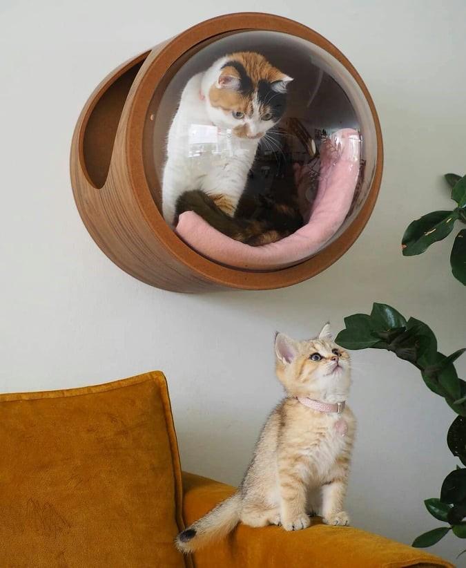 Nhà mèo