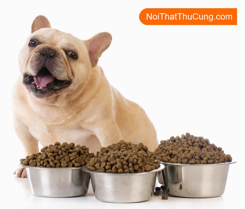 các loại thức ăn cho chó