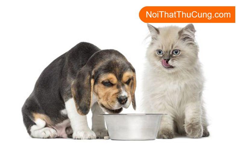 Thức ăn hạn chế thú cưng