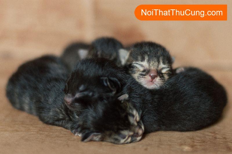 chăm sóc mèo chưa mở mắt