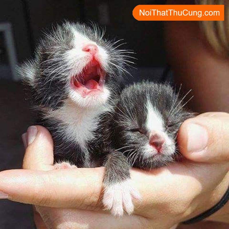 Cách chăm sóc mèo con chưa mở mắt