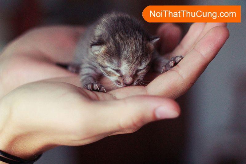 Chăm sóc mèo con chưa mở mắt