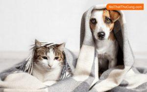 tuổi thọ của chó mèo