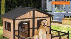 Kinh nghiệm chọn nhà cho những chú chó